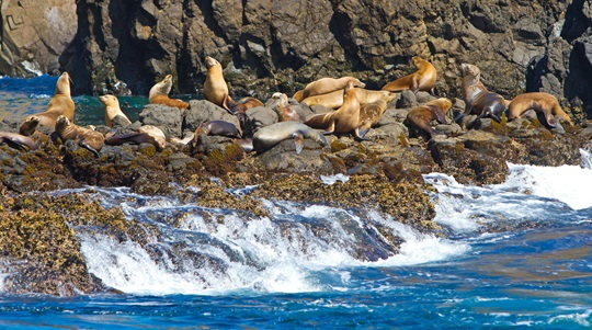 Sea lions, Channel Islands National Park